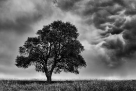 Standing as a Tree in the Storm